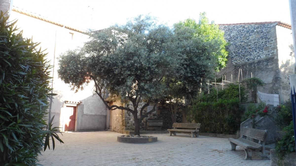 Caux 34720 dans le Languedoc Hérault  | place de l'olivier